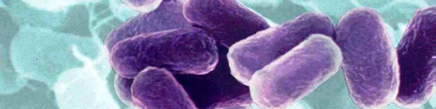 La-probiotica