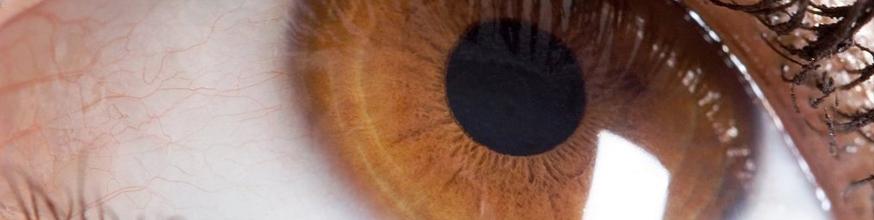 La-retinopatia-y-el-soporte-nutricional