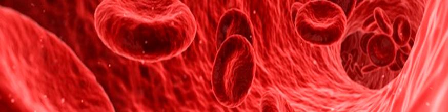 la-disfunción-endotelial-la-enfermedad-silenciosa-de-cada-uno-de-tus-vasos-sanguíneos