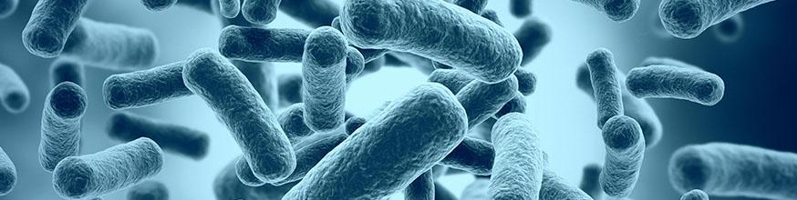 que-son-los-probioticos-y-para-que-sirve-los-lactobacilos-sporogenes